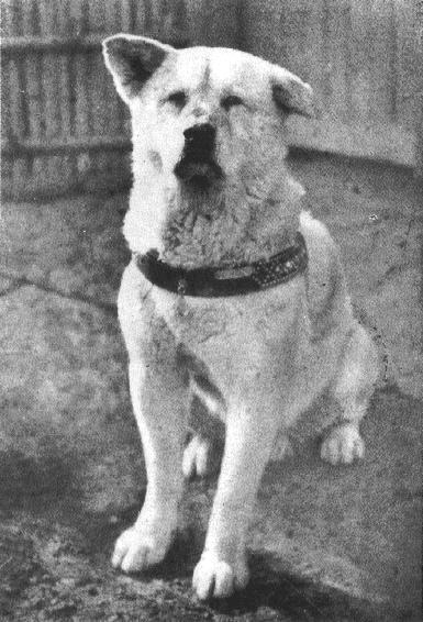 89e anniversaire du chien hachiko
